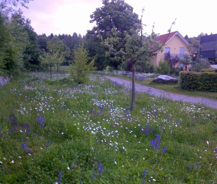 Quartier résidentiel en bordure de forêt à Bienne avec une prairie de fleurs des champs.
