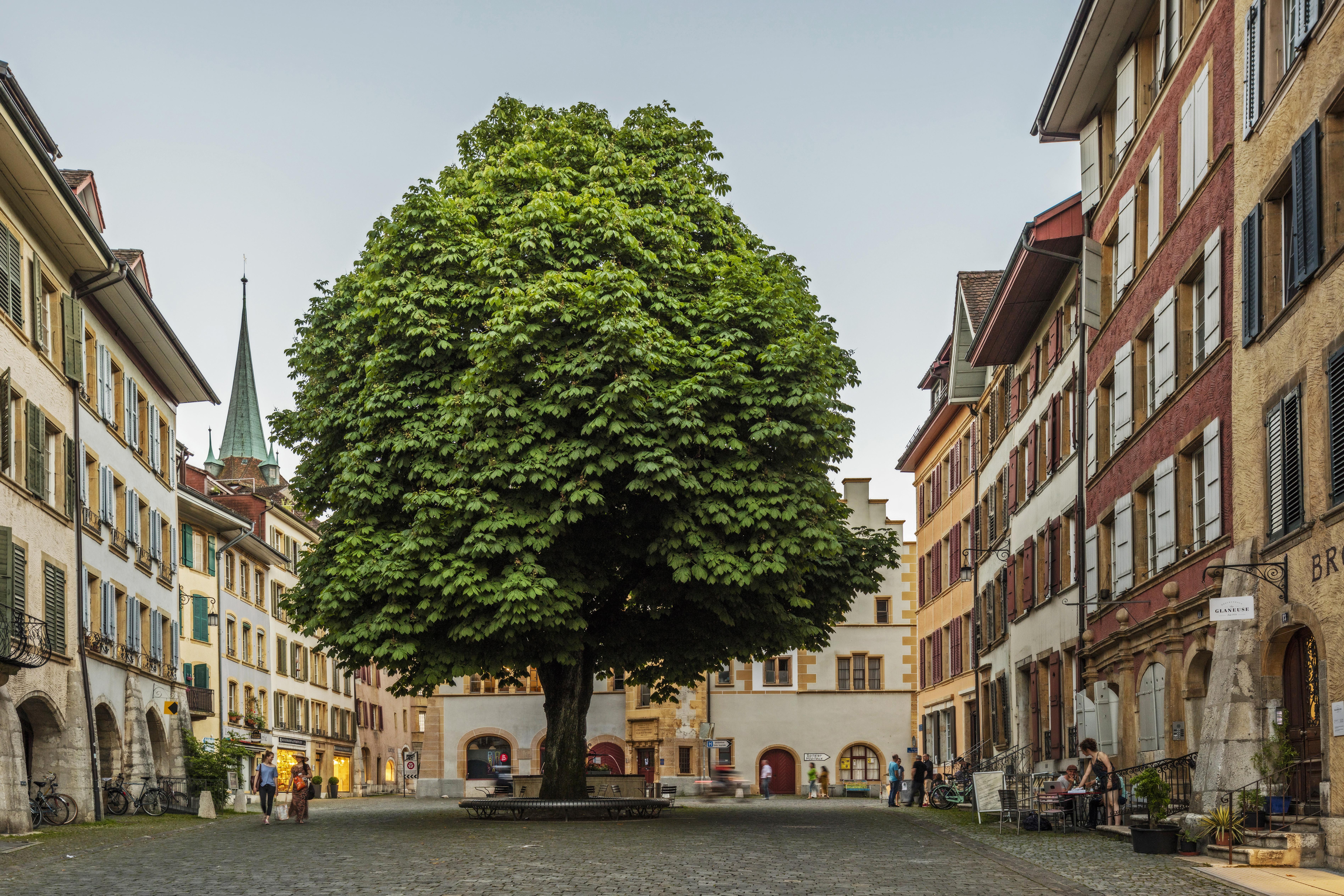 Man sieht einen grossen Platz mit Pflasterstein, auf dem ein grosser Baum und ein Brunnen stehen. Es gibt ein paar Fussgänger, die vorbeispazieren. Der Platz ist von alten, schönen Häusern umgeben.