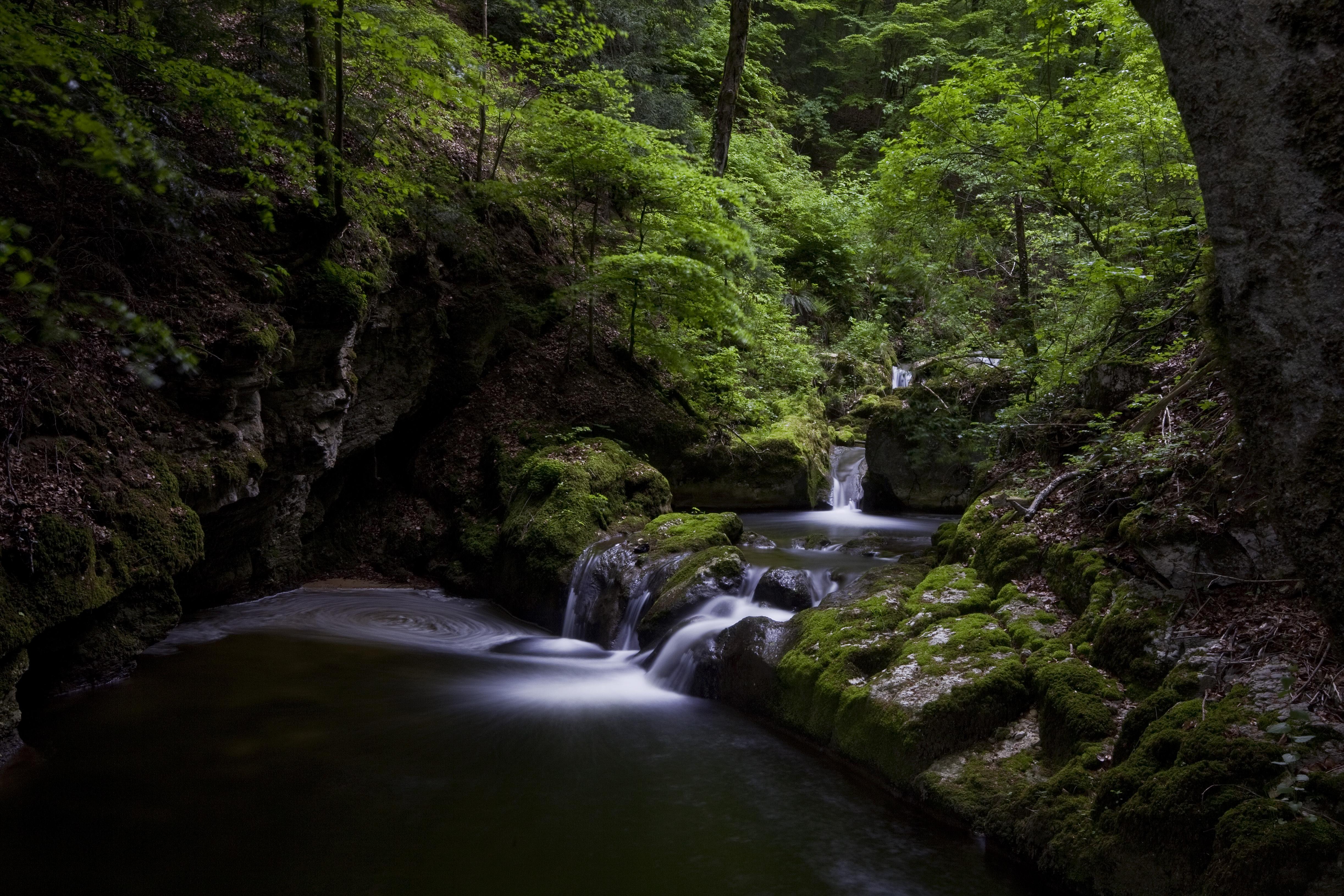 Ein Bach inmitten von Gesteinen, Sträuchern und Bäumen.