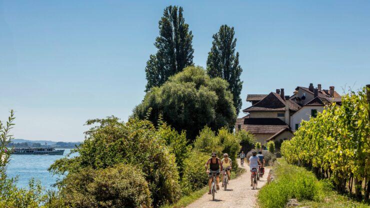Des cyclistes se croisent sur un chemin blanc entre le lac de Bienne à gauche et un vignoble à droite